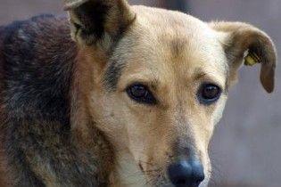 Бездомные собаки напали на зоопарк в Софии и загрызли 13 редких животных