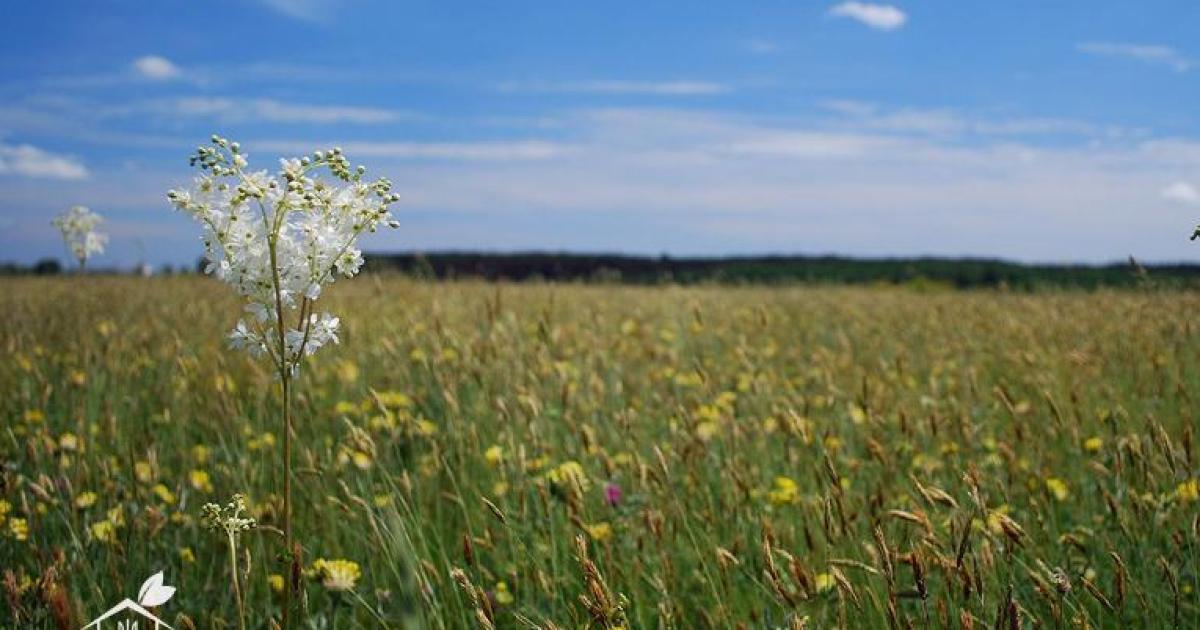 Гетманский национальный природный парк @ pzf.menr.gov.ua