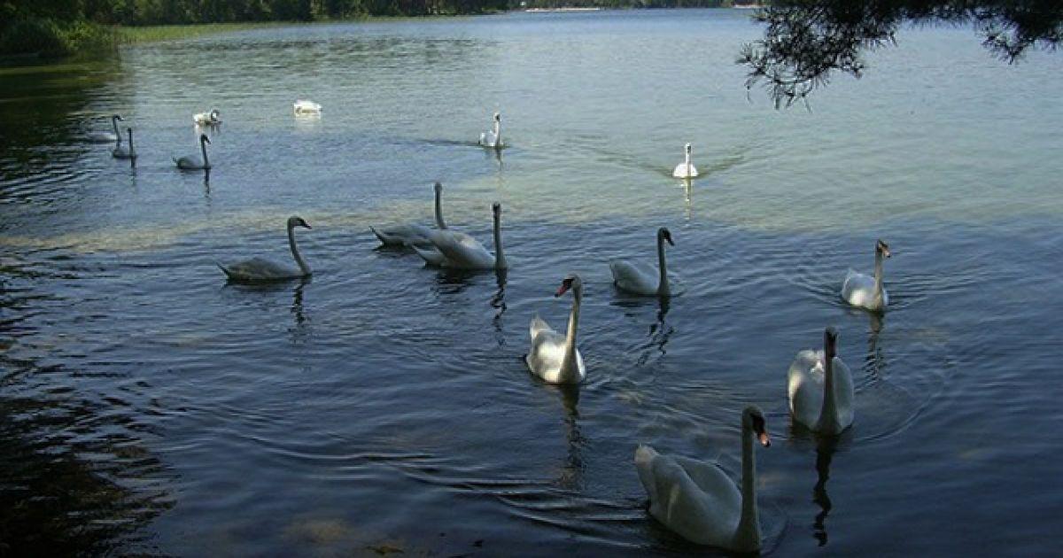 Шацкий национальный парк @ svityaz-centr.com