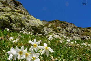 10 лучших национальных парков Украины
