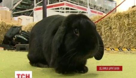 Британские кролики имеют собственное спортивное соревнование