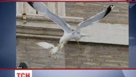 Ястреб будет охранять голубей Папы Римского от хищников