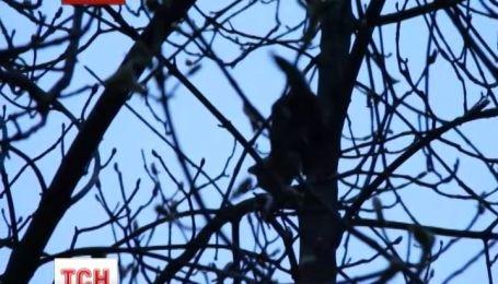 В Житомире спасли котенка, который четыре дня просидел на дереве