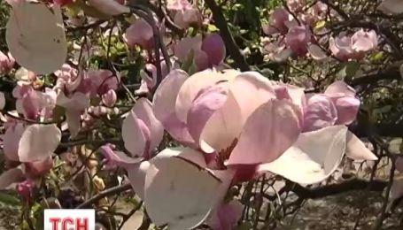 Синоптики прогнозируют на майские праздники дождь и грозы