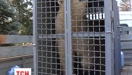 У Миколаїв прибула біла ведмедиця з Москви