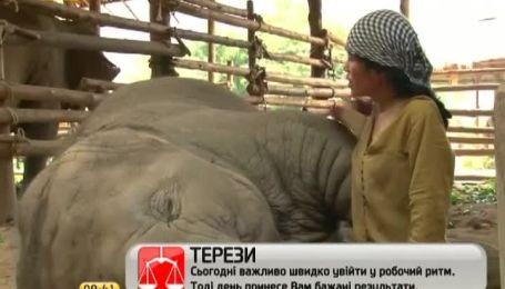 Интернет взорвало видео колыбельной для слона