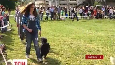 Беспородные собачки собирают средства для украинских военных на Прикарпатье