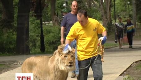 Циркачи выгуляли в центре Киева молодого льва