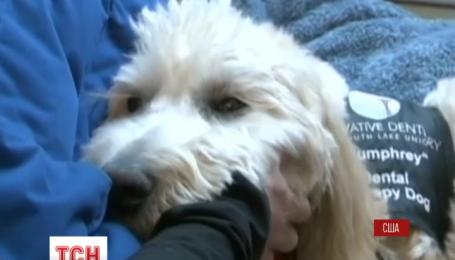 Стоматолог из Сиэтла предлагает больным успокаиваться с помощью щенка