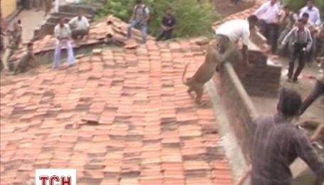 Леопард в Індії покусав своїх рятівників