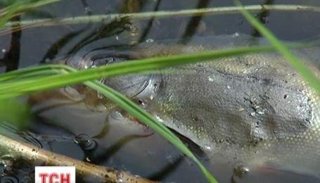 У Києві масового загинула риба