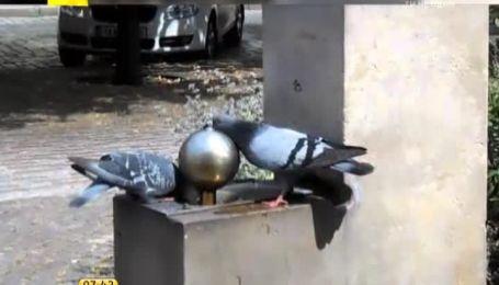 Влада міста Відень заборонила підкормлювати міських голубів