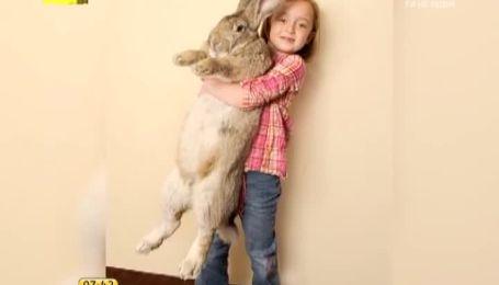 25-кілограмовий кролик потрапив у Книгу рекордів Гіннеса