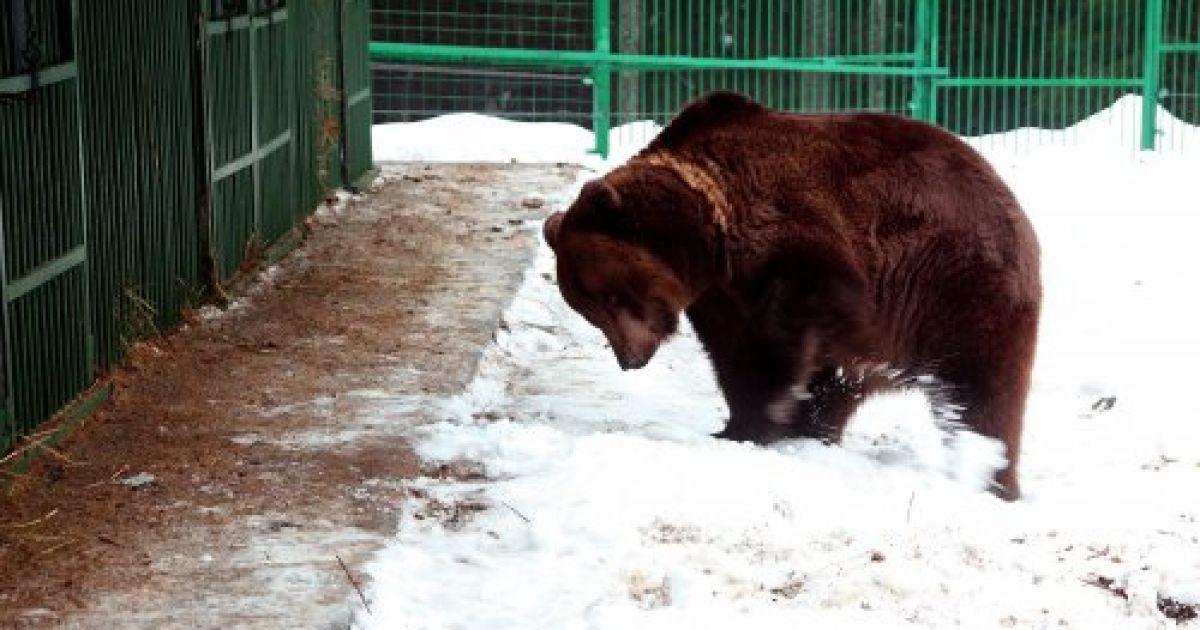 """Реабілітаційний центр для бурих ведмедів у національному природному парку """"Синевир"""" (Закарпаття) @ УНІАН"""
