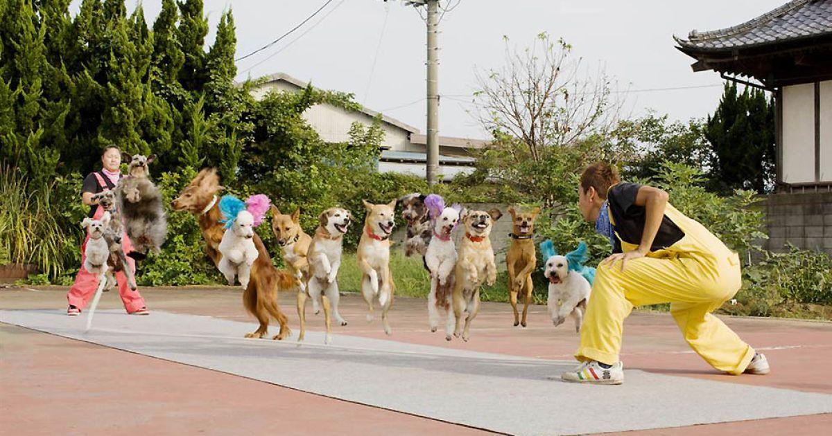 Найбільша кількість собак, що стрибали на скакалці @ Guinness World Records