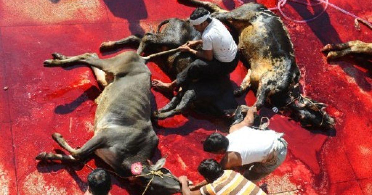Пакистан, Лахор. Пакистанські мусульмани забивають жертовних тварин перед мечеттю в Лахорі під час святкування другого за величиною щорічного свята Ід аль-Адха, свята жертвопринесення. @ AFP