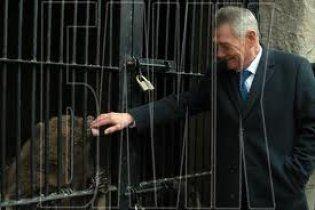 Ведмежата Потап і Настя з Київського зоопарку мучаться безсонням