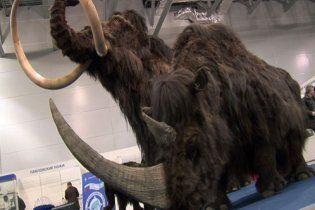 У Сибіру знайшли живі клітини мамонта