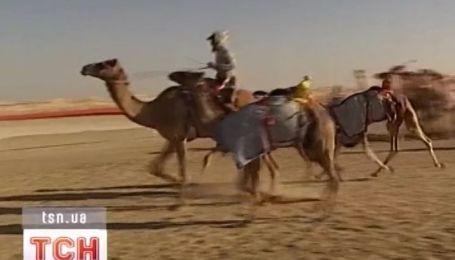 Большие гонки на верблюдах