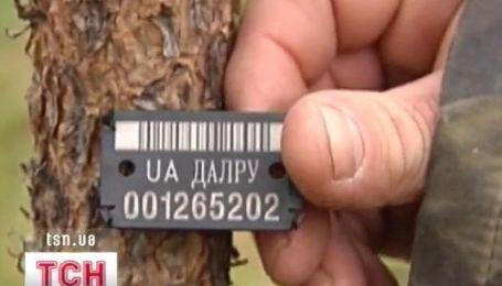 Ажиотаж на елочных плантациях Украины