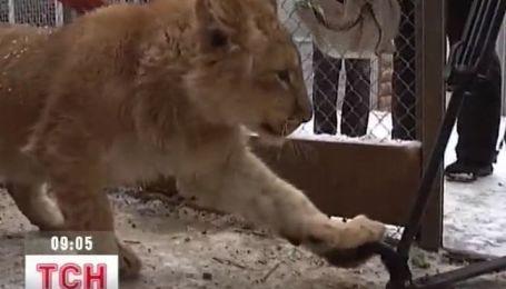 В Харьковском зоопарке новый житель