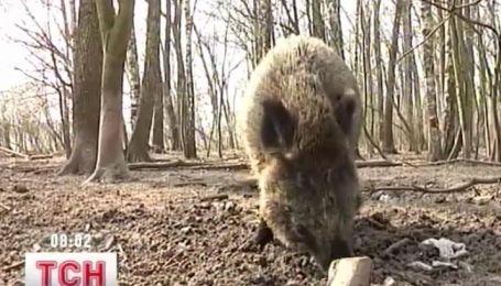 На Черниговщине пятеро охотников отравились шашлыком из дикого кабана