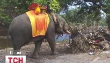 В Таиланде слонам оплачивают больничные и пенсию