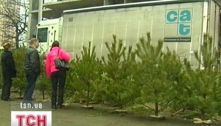 Борьба с незаконной вырубкой елок и сосен