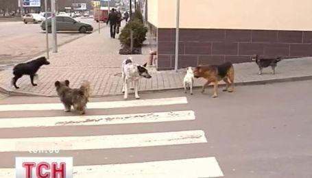 В столице запретили продажу собак и кошек