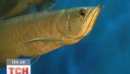Рыба-дракон - одна из самых опасных рыб
