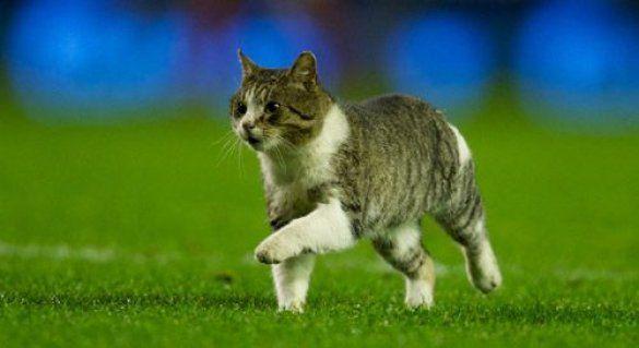Ліверпульський кіт_2