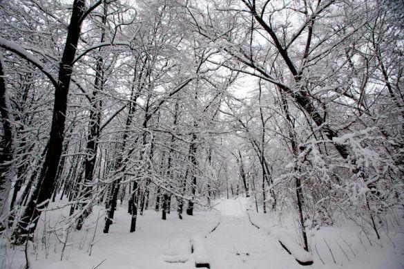 Зима у Києві_40
