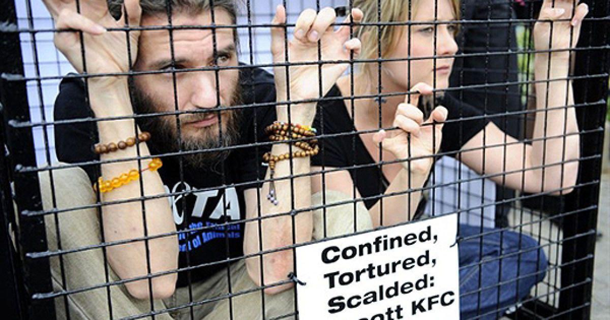 Акція протесту організації РЕТА проти фаст-фудів KFC, що спеціалізуються на стравах з курки, у Йоганнесбурзі. @ AFP