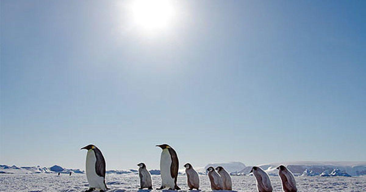 """Остання поїздка криголама """"Капітан Хлєбніков"""" до берегів Антарктиди відбудеться 24 листопада і триватиме 15 днів @ The Telegraph"""
