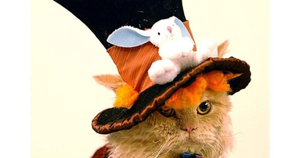 Конкурс на найкращий костюм серед кішок виграв кіт Сальваторе @ AFP