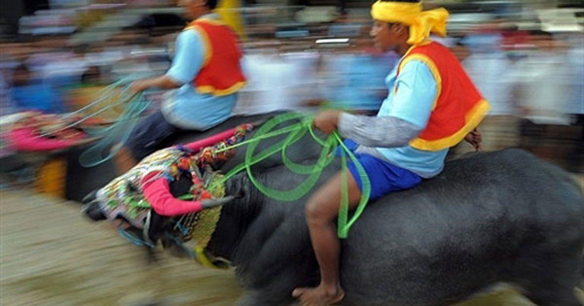 """Камбоджа, Віхеар Соар. Камбоджійці їдуть верхи на буйволах під час святкування """"фестивалю смерті"""" Пхум Бен у селі Віхеар Соар. Тисячі камбоджійців зібрались у невеликому селищі на північному сході країни, щоб подивитись на щорічні перегони на буйволах, що знаменують закінчення 15-денного """"свята мертвих"""". @ AFP"""