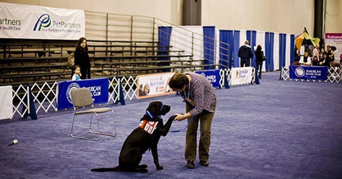 """У Нью-Йорку відбулась виставка """"Meet the Breeds"""" (""""Познайомтесь з породами""""), на якій було представлено більше 200 порід кішок і собак. @ AFP"""