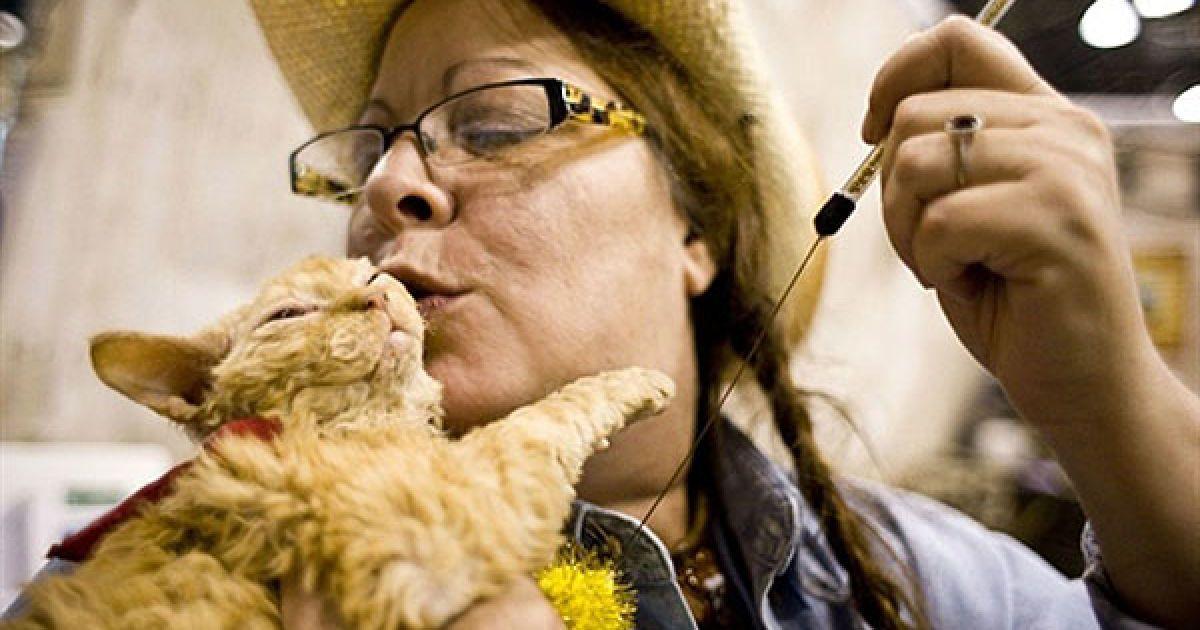 Діана Боув та її кіт породи селкірк рекс на прізвисько Кьорлван @ AFP