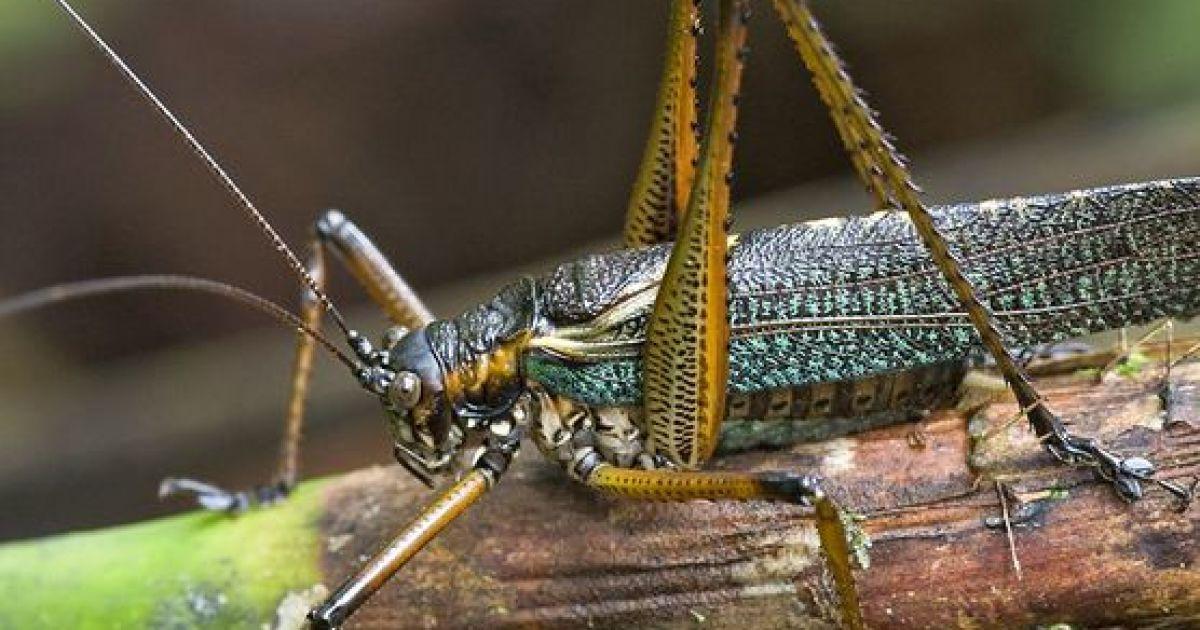 Новый вид рода Mossula @ National Geographic