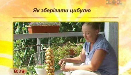Советы: как сберечь лук