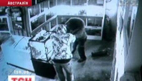 У Мельбурні двоє злодіїв пограбували зоомагазин