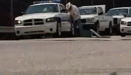 В штате Северная Каролина на шерифа напал пчелиный рой
