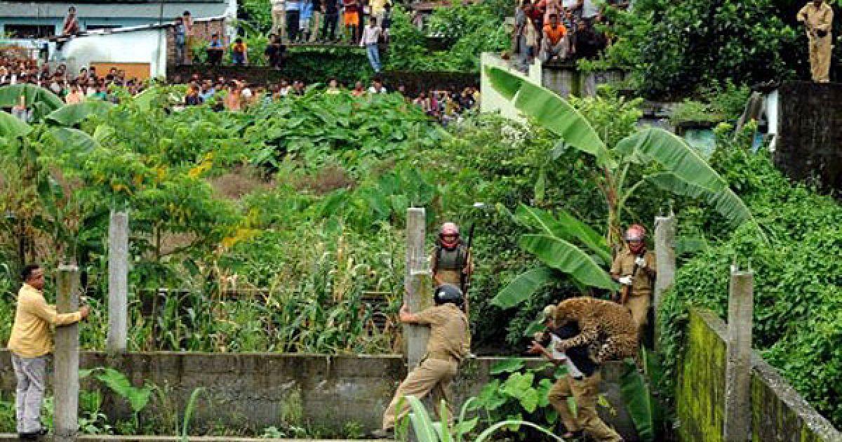Леопард атакував лісову охорону в Індії @ AFP