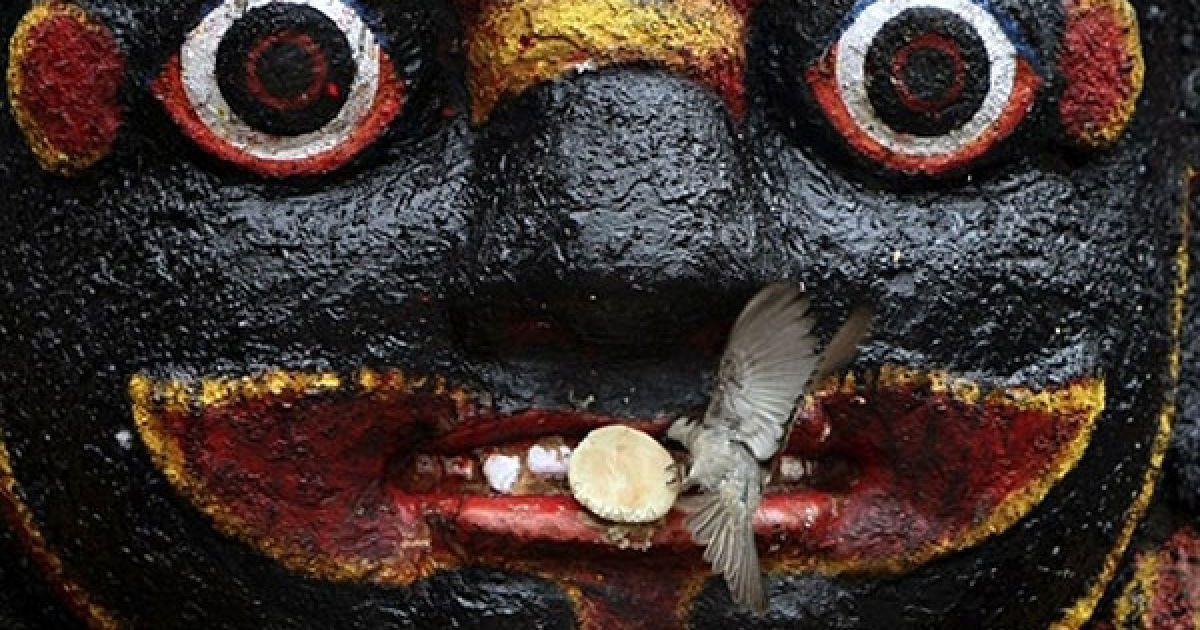Непал, Катманду. Птах бере їжу з вуст статуї індуїстського богині руйнування Калі Бхайраб на площі Дурбар в Катманду. Площу Дурбар занесено до списку світової спадщини ЮНЕСКО. @ AFP