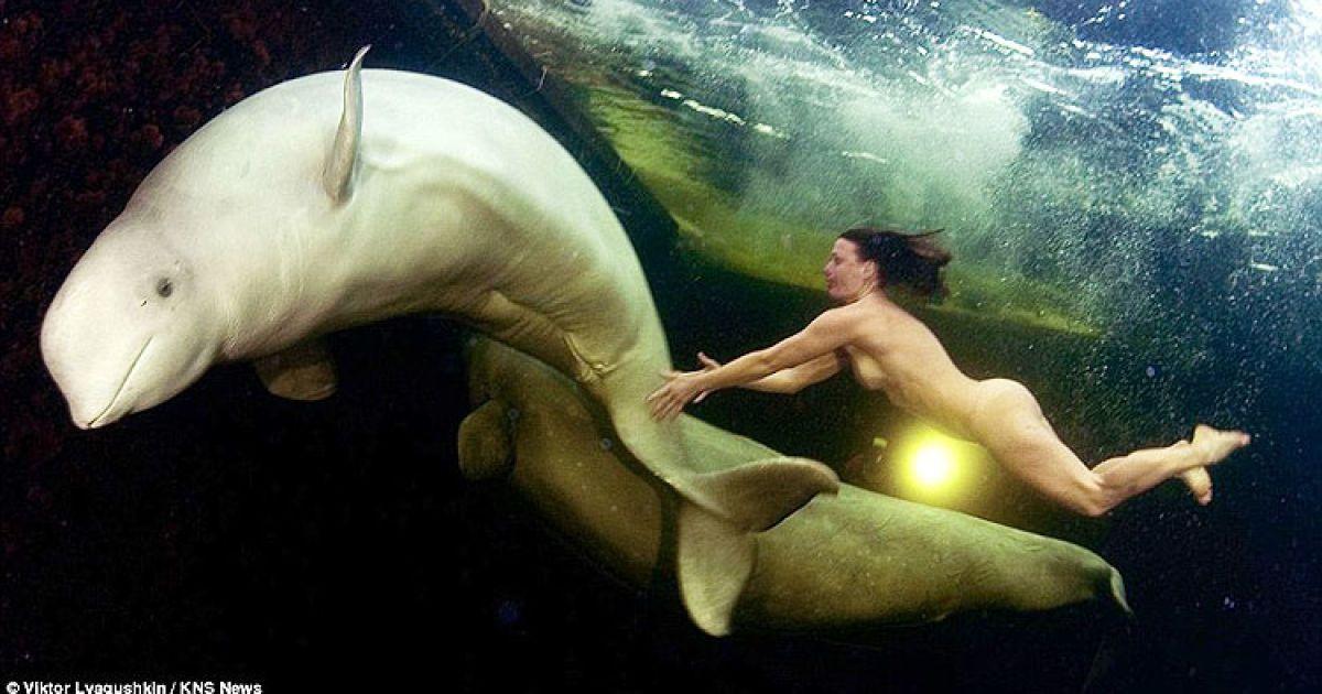 Спортсменка поплавала з китами у Арктиці @ Viktor Lyagushkin/KNS News