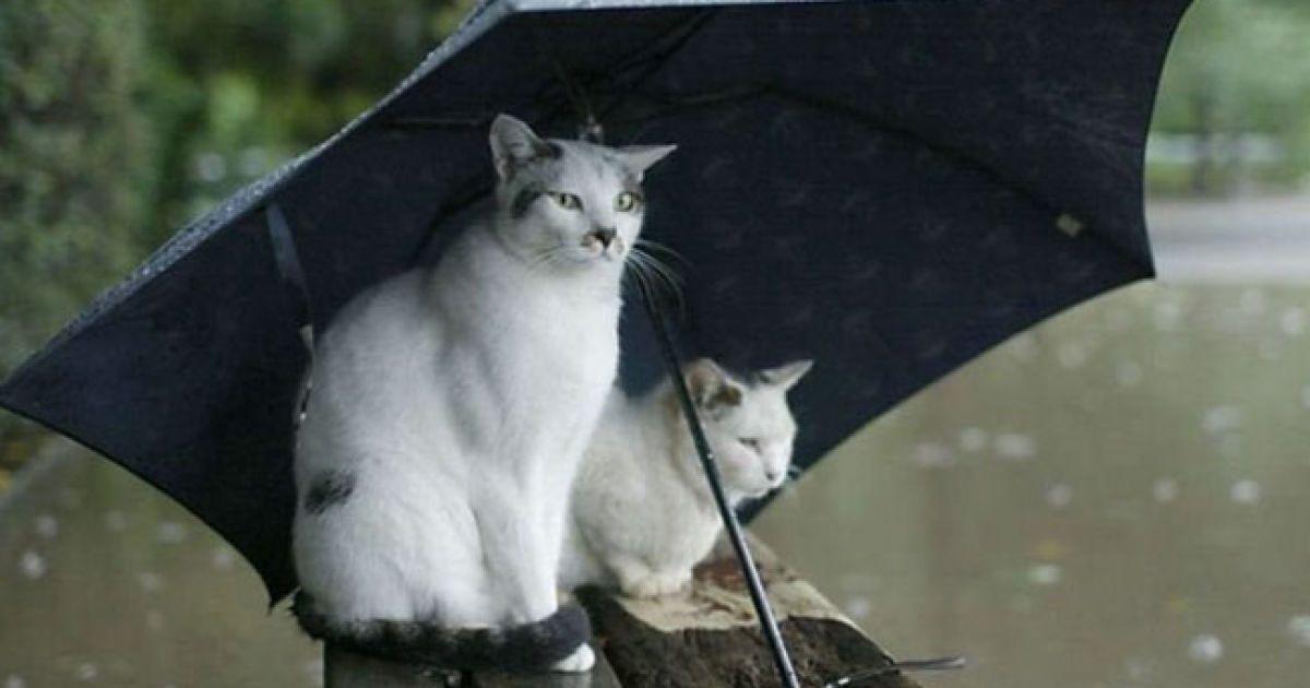 В Украину в ближайшие дни придут дожди с грозами