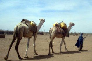 Посуха на сході Африки визнана найгіршою за 60 років