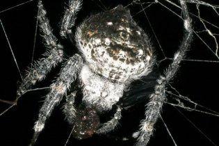 Топ-10 найдивніших істот, яких відкрили у 2010 році
