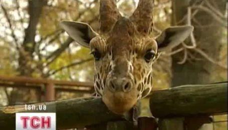Киевский зоопарк не закроют и в Гидропарк не перенесут