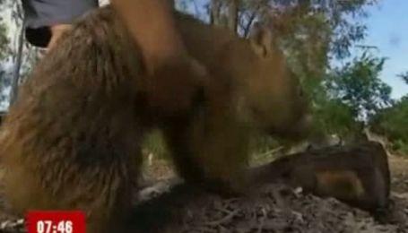 Тварина і любов